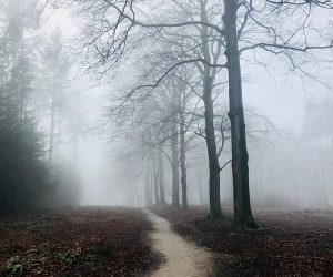 path through trees in the fog